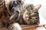 kot na podłodze