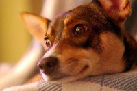 http://zwierzakowo.pl/sklep/smycze-i-obroze-dla-psow.html