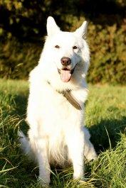 pozytywne szkolenie psów warszawa