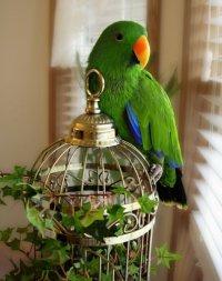 Papuga z klatką